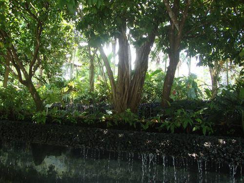 Тропическа джунгла в центъра на града
