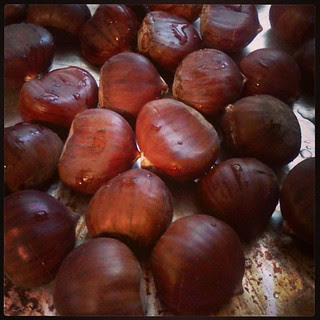chestnut season