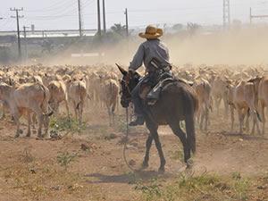 Mato Grosso não faz fronteira com país, mas está há 15 anos sem foco. (Foto: Leandro J. Nascimento)