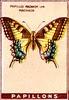 papill 19