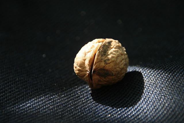 ksiroi-καρποί-antigiransi