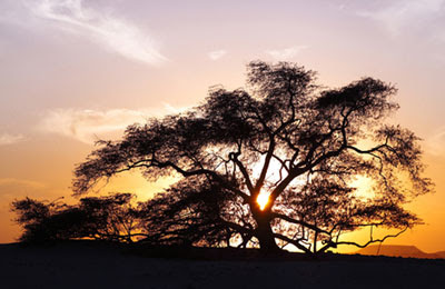 tree of life bahrain at sunset
