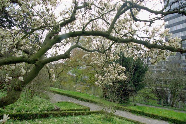 Endlich! Frühling! Nichts wie raus und im botanischen Garten spaziert!