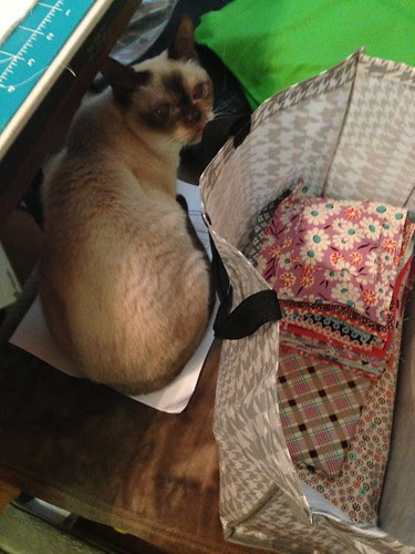 I can no longer read my pattern (On A Whim by Thbleblossoms) my helper is sitting on it. by aviva_hadas (Amy)