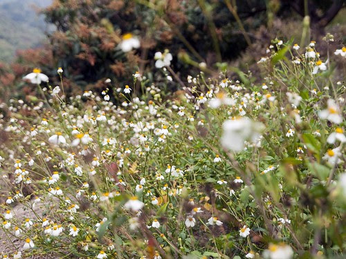 白花花的世界