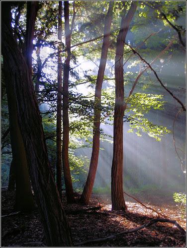 Morningsun in the forest