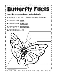 Parts of a Butterfly_th