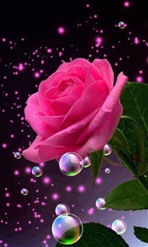 flower wallpaper rose  wallpapercom