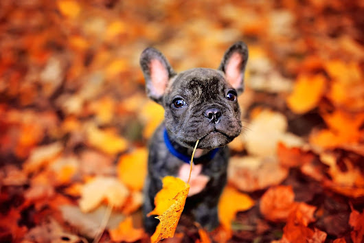 Fall Pet Grooming to Keep Your Dog Happy and Healthy