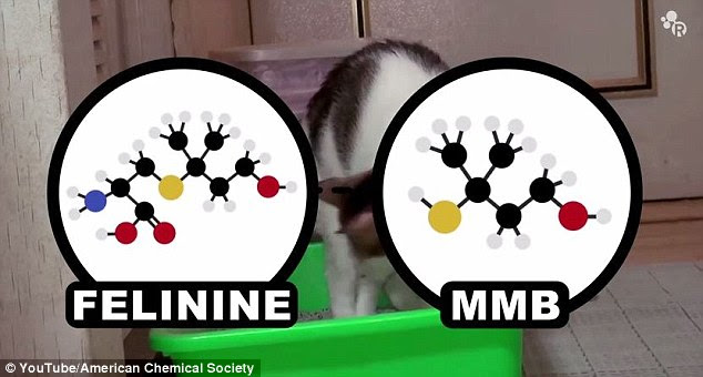 Cat urine gets its unique smell from a compound called felinine. Felinine is broken down into a sulphur called MMB, and male cats use MMB as a pheromone to let females know they are ready to mate. The scientists explain that kitty litter absorbs this smell using clay minerals known as Fuller's Earth