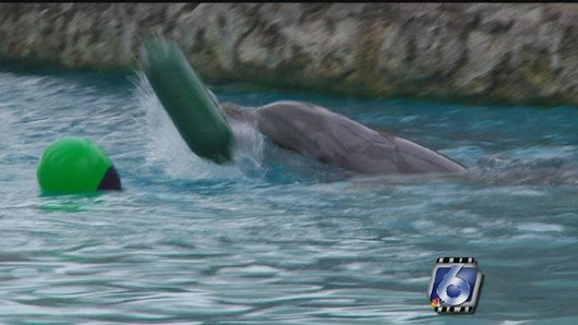 Texas State Aquarium conducts dolphin research