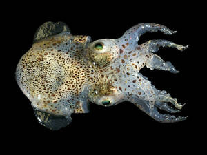 Squid don't just see with their eyes