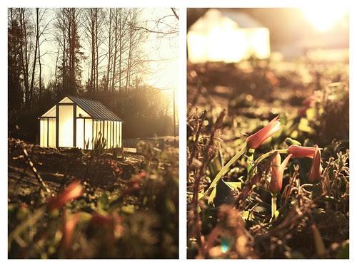 Sunrise in the garden