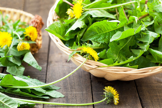Dandelion Leaves - Much More Than a Pesky Weed