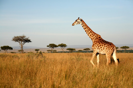 Must See Places in Nairobi - Let the Safari Capital of Africa Charm You - Travel Wide World