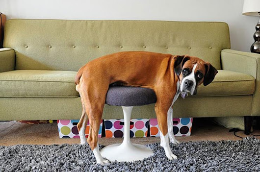 Dogs & Cats & 20 Furniture Malfunctions