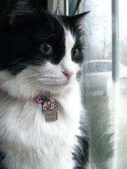 Josie watching the rain