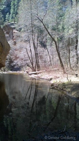 along the West Fork of Oak Creek