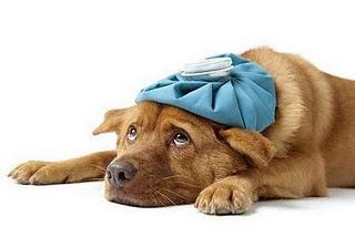 La diarrea en los perros