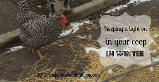 Keeping Lights On in a Chicken Coop over Winter