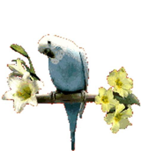 great animated parrot gifs   animations