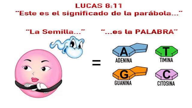 lucas-8-11