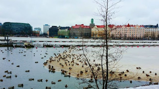 Helsinki Finland Frozen Lake Snow ❄ Tree Hakaniemi Suomi Ducks Cityscape City View