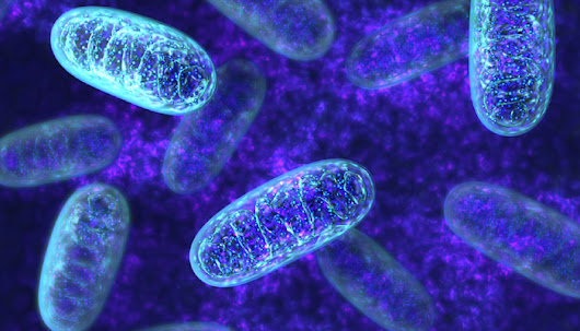 Nuclear-mitochondrial mismatch: Divergent evolution and the safety of mitochondrial replacement therapy - BMC Series blog