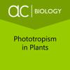 Sebit, LLC - Phototropism in Plants artwork