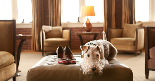 Pets on the Premises? It's a Hotel Perk - The New York Times
