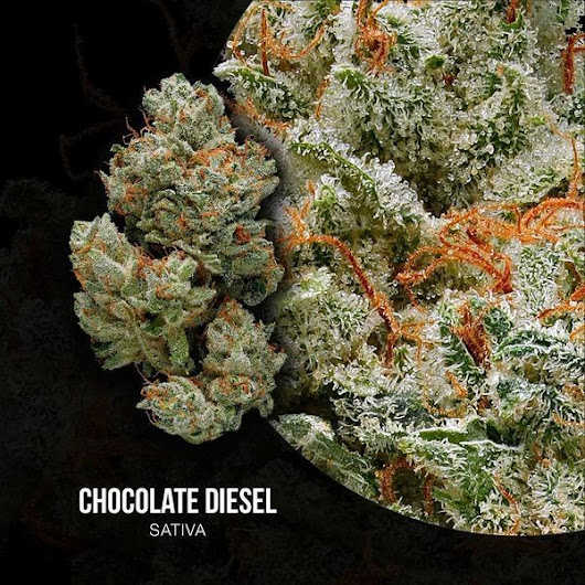 Chocolate Diesel Strain: Buyer's Guide to Cannabis Strains