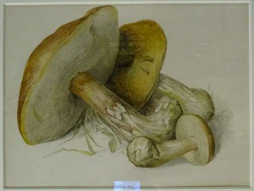 Boletus Watercolor by Beatrix Potter