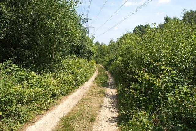 DSC_6685 Wayleave in woodland