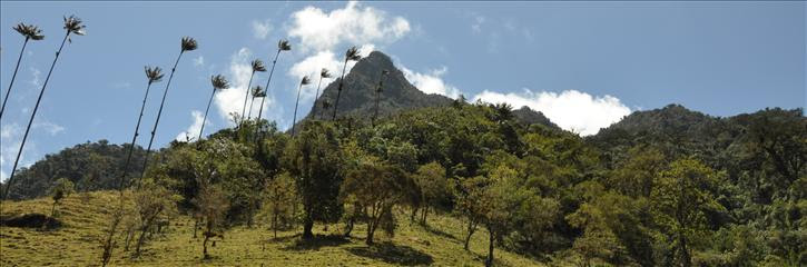 05_valle_cocora_0041a