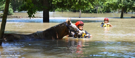 When The Storm Clears, Veterinary Challenges Remain For Horses Stuck In Flood Waters  - Horse Racing News | Paulick Report