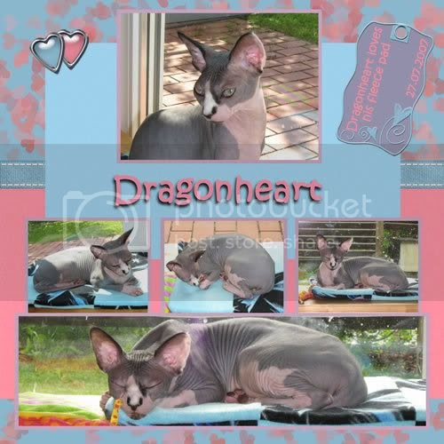 Hairless Cats Rescue Pa