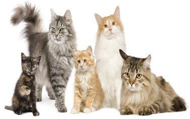 Identifying Cat Coat Colors