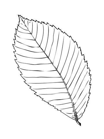 warnio05 dennenboom in pot kleurplaat