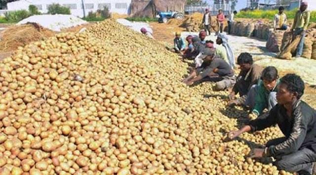 आम लोगों की बढ़ी मुश्किलें, किसान आंदोलन की वजह से आलू हुआ इतना महंगा