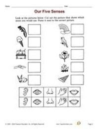 five sense worksheet: NEW 989 FREE FIVE SENSES CUT AND