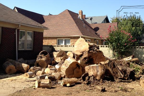 huge tree pieces