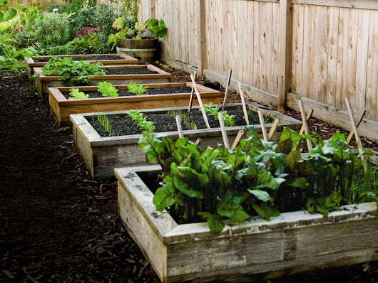 How to Build Raised Garden Beds in 4 Steps