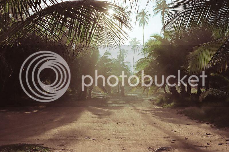 Coco frio, Puerto Rico, Surf, Contax G2, Film, Palm trees, Crash Boat Beach, Denasty, Sunrise, Holiday, Travel, photography, photo Palmssun_zpsqxuamvsi.jpg