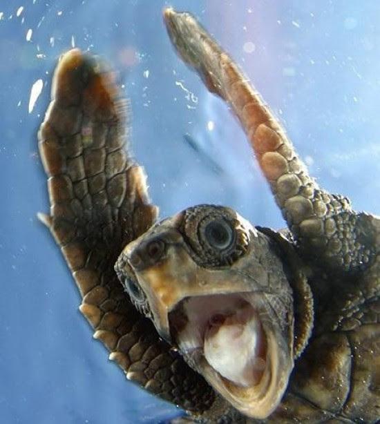 Χελώνες σε έκσταση (1)