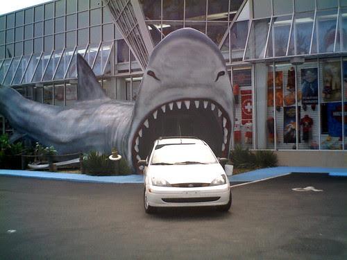 Frank Shark