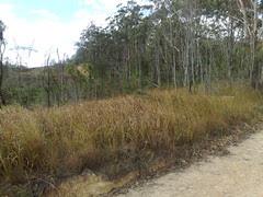 Rail Trail (3)