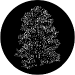 Elm, Stock Gobo For Gobo Light Projectors, Choose Your Size | Event Decor Direct