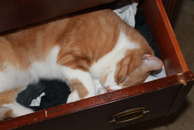 August sleeping in Ryan's drawer