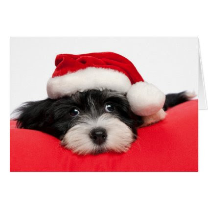 Cute Christmas Havanese Puppy Dog Greeting Card