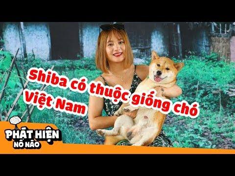 Top 5 Giống Chó Thuần Chủng Hiếm Nhất Của Việt Nam, Số 4 Được Cả Thế Giới Săn Đón | PHNN S77
